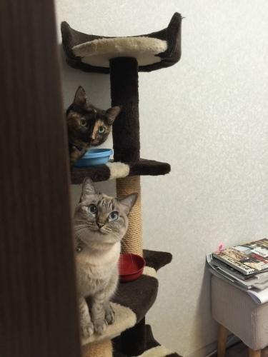My kittens._c0153966_19061626.jpeg