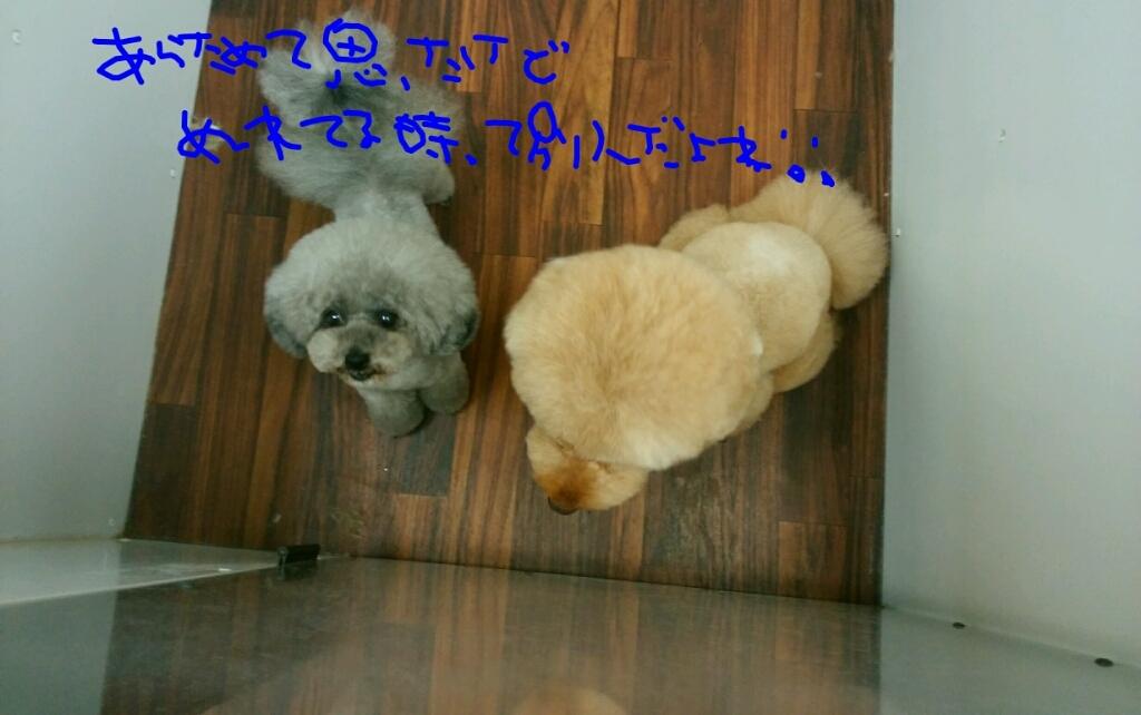 b0130018_19002921.jpg