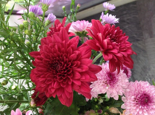 花粉とホコリと乾燥に注意!!_a0200423_178885.jpg