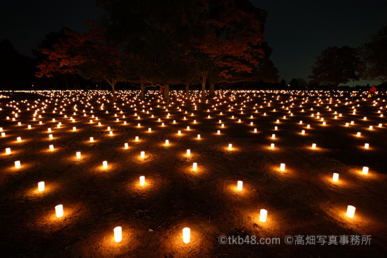 春日大社正遷宮 奉祝なら燈花会 A lantern festival in the Kasuga-taisha shrine._e0245846_21292581.png