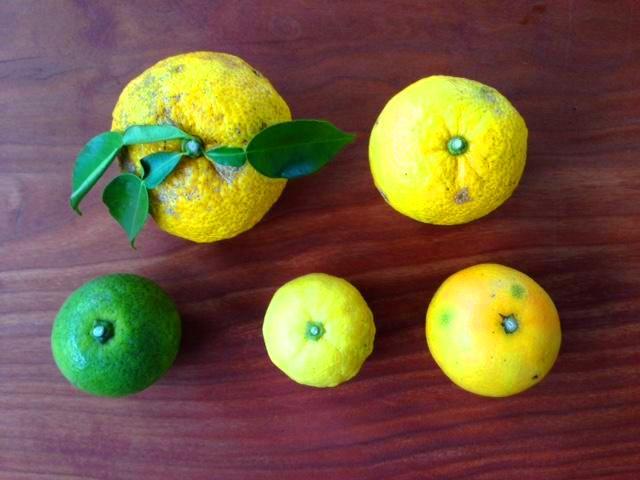 柑橘たっぷりポン酢作り講座 開催しました♪_d0298850_0582336.jpg