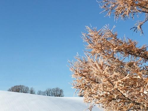 冬囲い強制終了(^^;)の巻_e0326953_11130502.jpg