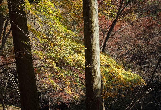そしてスケッチはいつもの天神からです。 紅葉狩りもあり。_a0037907_10403563.jpg