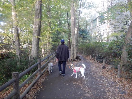 いつものお散歩も秋色_f0329311_18083842.jpg