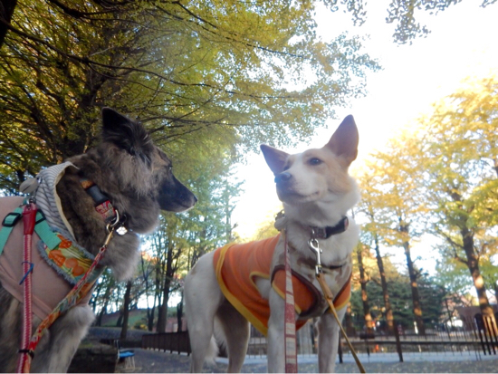 いつものお散歩も秋色_f0329311_18083987.jpg