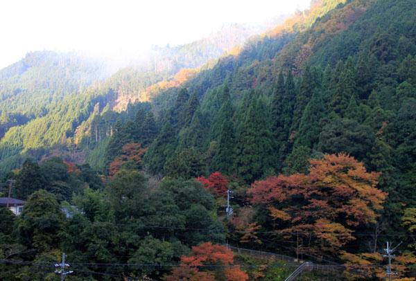 紅葉探訪5 宗蓮寺_e0048413_2151246.jpg