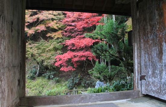 紅葉探訪5 宗蓮寺_e0048413_2152468.jpg