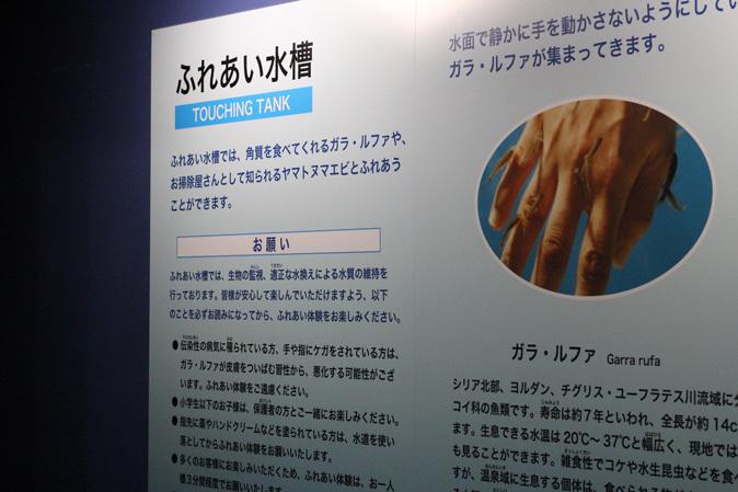 しながわ水族館:不老不死のクラゲと人間の角質を食べる魚_b0355317_11573335.jpg