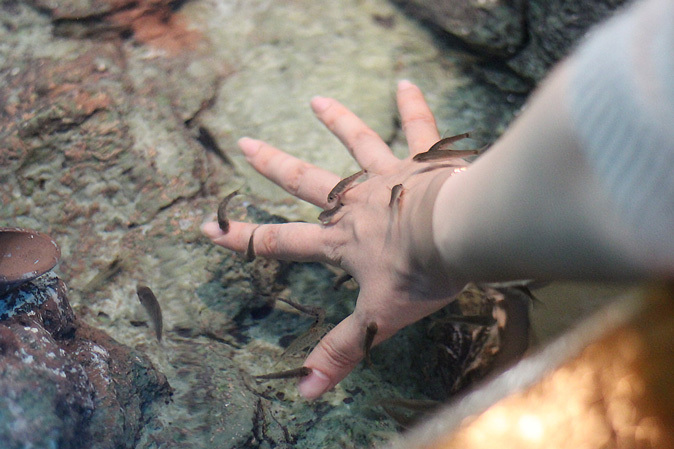しながわ水族館:不老不死のクラゲと人間の角質を食べる魚_b0355317_11592957.jpg