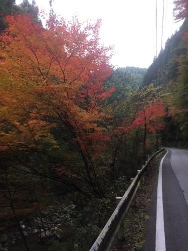 2016年馬路村の紅葉だより_e0101917_16361449.jpg