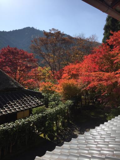 美山の紅葉_c0223630_15381147.jpg