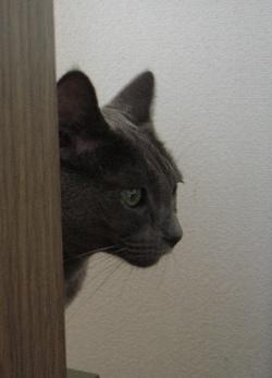 「家政婦は見た」3・聞き捨てならない 主演:いちじく_e0359436_14273939.jpg