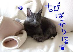 コロコロ気分_e0359436_14422434.jpg