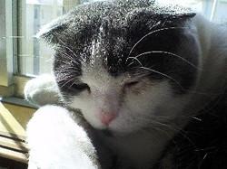 猫・猫・猫_e0359436_14424873.jpg