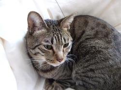 美猫かも_e0359436_14490054.jpg