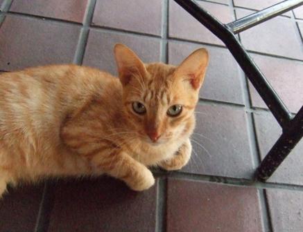 ホテル猫_e0359436_14512080.jpg