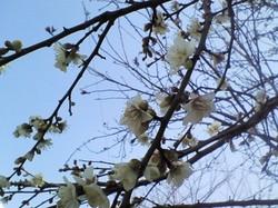 もうすぐ立春_e0359436_15241187.jpg