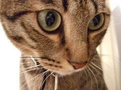 猫もこわい夢をみる_e0359436_15273376.jpg