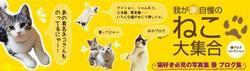 『我が家の猫大集合~猫ブログコレクション~』_e0359436_15280325.jpg