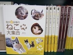 あべの本屋行脚~猫ブログコレクション~を探して_e0359436_15280518.jpg