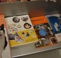 あべの本屋行脚~猫ブログコレクション~を探して_e0359436_15280599.jpg