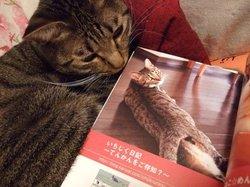 「我が家自慢のねこ大集合~猫ブログコレクション~」の真実_e0359436_15281721.jpg