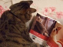 「我が家自慢のねこ大集合~猫ブログコレクション~」の真実_e0359436_15281723.jpg