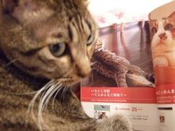 「我が家自慢のねこ大集合~猫ブログコレクション~」の真実_e0359436_15281784.jpg