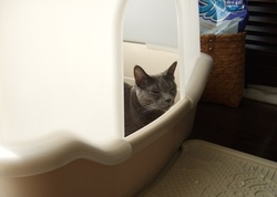 「我が家自慢のねこ大集合~猫ブログコレクション~」の真実_e0359436_15281894.jpg