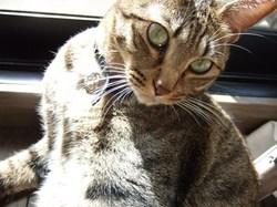 2月22日は猫の日…_e0359436_15295029.jpg