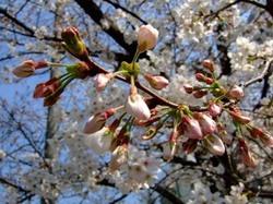 咲きすすむ_e0359436_15301504.jpg
