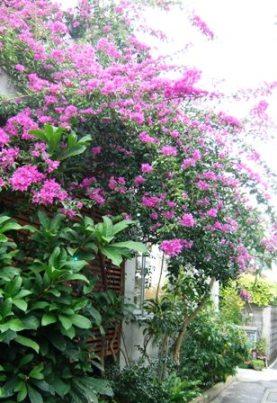 沖縄のふしぎ_e0359436_22471723.jpg