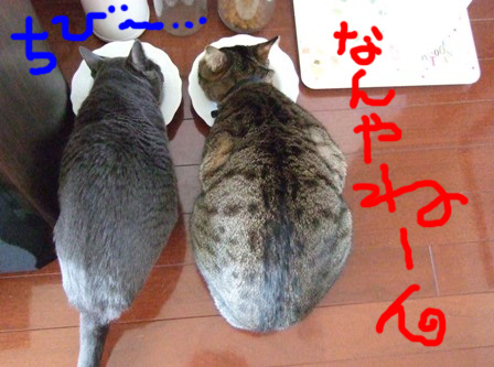 仲よき冬の丸丸_e0359436_22485805.jpg