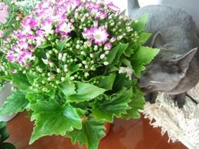 春の花の福袋_e0359436_22490008.jpg