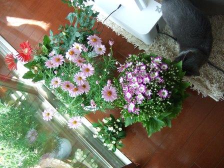 春の花の福袋_e0359436_22490025.jpg