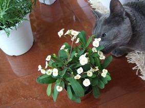 春の花の福袋_e0359436_22490052.jpg
