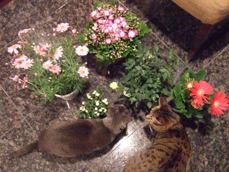 春の花の福袋_e0359436_22490077.jpg