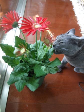 春の花の福袋_e0359436_22490120.jpg