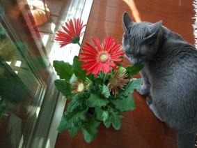 春の花の福袋_e0359436_22490137.jpg