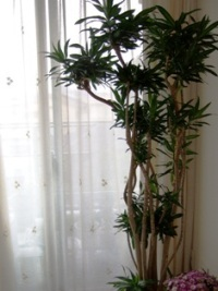 はじめての観葉植物_e0359436_22490685.jpg
