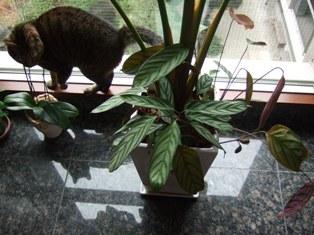 はじめての観葉植物_e0359436_22490689.jpg