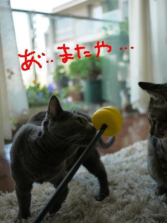 くぬぼんとうんち棒2_e0359436_23022715.jpg