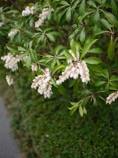 春の午後_e0359436_23042814.jpg