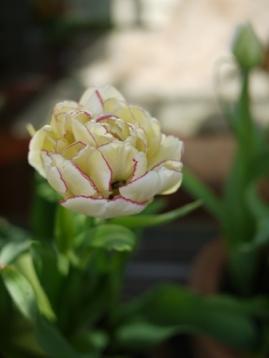 花の宴のあと_e0359436_23043445.jpg