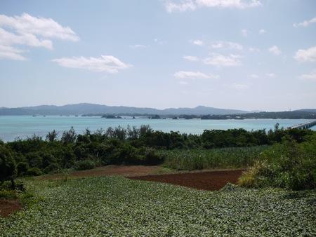 沖縄凸凹旅行*10 古宇利島ドライブ_e0359436_23105563.jpg