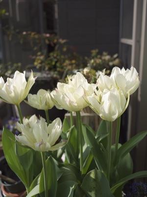 4月は花見る_e0359436_23141321.jpg