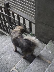はじめての台湾*12 九份茶坊であたたまること_e0359436_23222020.jpg