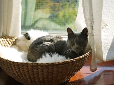 猫のひなたぼっこ_e0359436_23311081.jpg