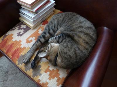 猫は猫であるって知らない_e0359436_23460952.jpg