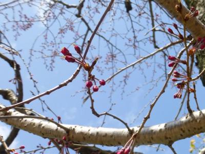 春は毎日更新ちう_e0359436_23553311.jpg